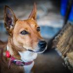 Foxy, brewery's dog